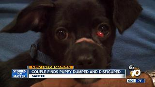 Couple finds puppy dumped and disfigured