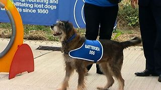Dogs and Cats Home Celebrates 1000th Volunteer - Video