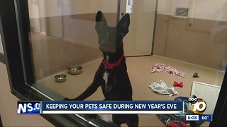 Keeping your pets safe during New Year's Eve