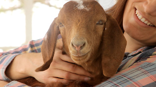 A baby goat was found near a busy street. You won't want to miss how this story ends.  - Video