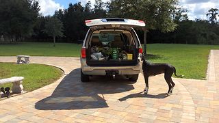 Great Dane delivers groceries on command