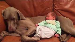 Cute Dog and Tiny Baby Share a Special Bond - Video