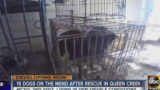 More than a dozen dogs removed from Queen Creek home - Video