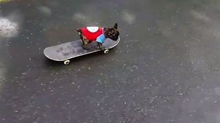 The Most Talented Puppy Skateboarder - Video