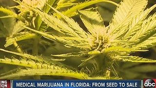 A behind-the-scenes look at the making of medical marijuana in Florida - Video