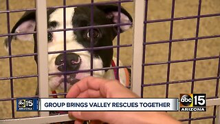 PACC911 brings animal rescues together