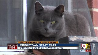 Middletown stray cats