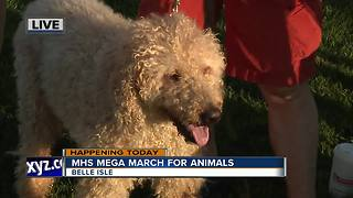Mega March for Animals - Video