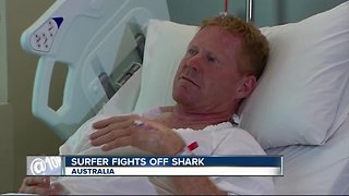 Surfer punches shark to stave off attack