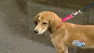 "Rainy day puts a damper on Humane Society's ""Pledge for Pets"" event"