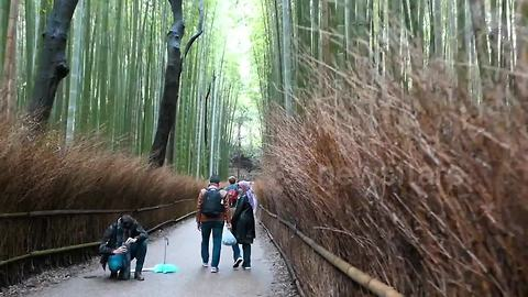 Man takes walk in 'magical' bamboo forest in Kyoto
