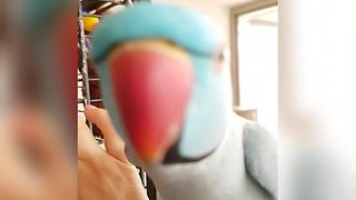 Talking Parrot Has A 'Profound' Conversation With Her Owner - Video