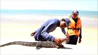 Monitor lizard caught on beach after terrified tourists mistook it for a crocodile - Video