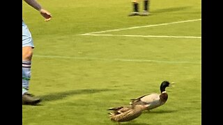 Soccer Player Chases Ducks Off Field During Cup Final