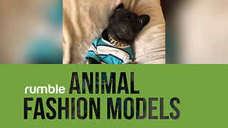 This compilation of animal fashion models is super trendy!  - Video