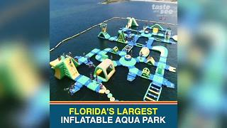 Check out Florida's largest inflatable aqua park in Pasco County