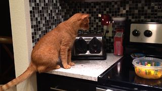 Scaredy Cat Toaster Surprise - Video