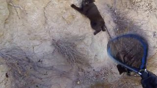 Fearless Rescuers Rappel Down Cliff To Save A Cat - Video