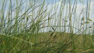 Golfers not concerned with fescue at Erin Hills