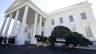 White House Plans Holiday Parties Despite Rising COVID-19 Cases