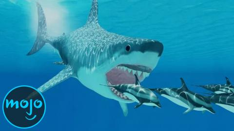Top 10 Interesting Facts About The Megalodon