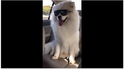 Is this the coolest dog you've ever seen?