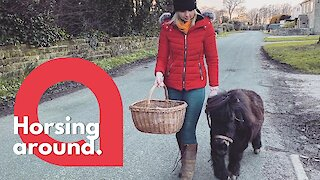 Shetland pony delivers supplies to the vulnerable