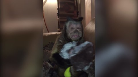 Monkey Steals Dog's Toy, Talks Back To Owner
