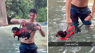 Adorable clip sees dachshund being given jump start before paddling in water