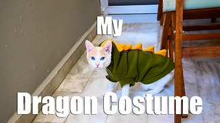 Chapy Cat Wearing a Dragon Costume - Video