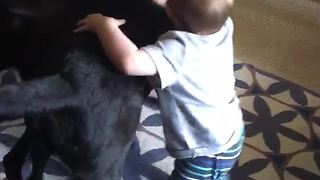 Baby thinks he's one of the dogs - Video