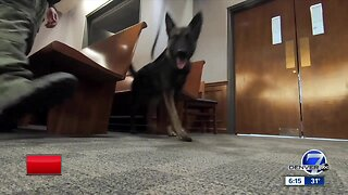 Meet Nuke, Arapahoe County's first bomb-sniffing dog