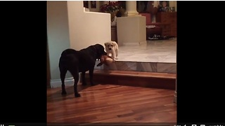 Dog encourages puppy to conquer fear of stairs - Video