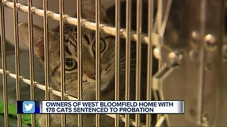 West Bloomfield couple gets probation after 178 cats removed from home