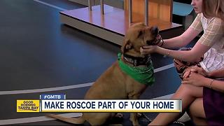 Rescue in Action: Roscoe, our July 8 superstar - Video