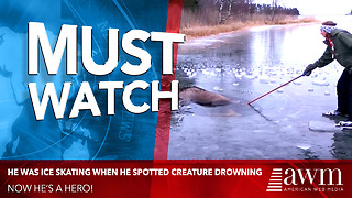 He Was Ice Skating When He Spotted Enormous Creature Drowning. Now He's A Hero