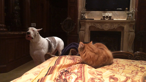 This Is The Cutest Battle For A Spot On The Bed You'll See Today
