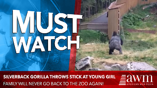 Gorilla Throws THIS At A Young Girl, And Her Family Won't Be Back Anytime Soon.. - Video