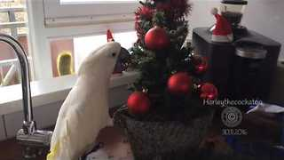 Harley the Cockatoo Redecorates the Christmas Tree