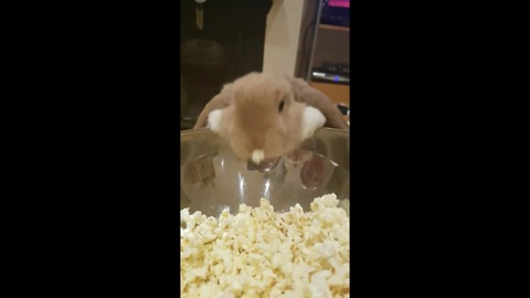 Cute Bunny Really Loves Popcorn