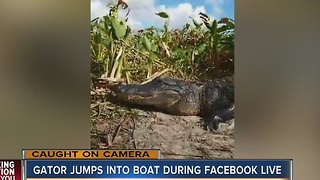Gator jumps into boat during Facebook LIVE - Video