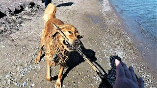 Mischievous dog fetches stick then shakes water on his owner