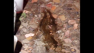 Virgin Appears In Puddle? - Video