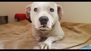 Treya's New Beginning - Stray Rescue of St.Louis - Video