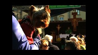 Holy Pets In Poland
