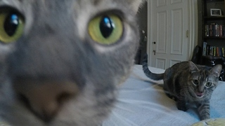 The Life Of A Cat - Play Date  - Video