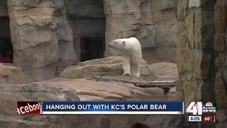 Hanging out with KC�s polar bear - Video