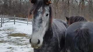 Funny horse wears gloves on his ears - Video