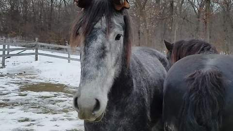 Funny horse wears gloves on his ears