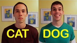 Cat-friend vs a dog-friend: Do you agree with this? - Video